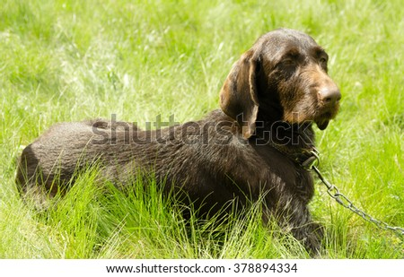 hunting dog on the nature of the spring #378894334