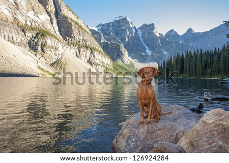 hunting dog sitting on a rock by a high altitude glacier lake with cliffs i the background