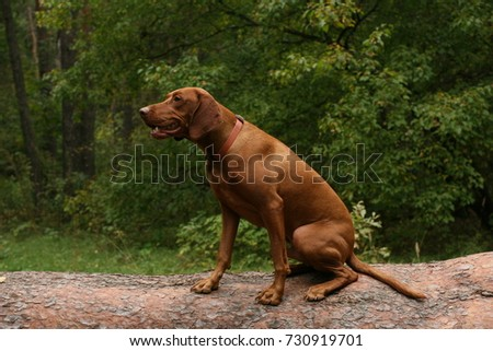 Hunting dog sitting on a tree #730919701