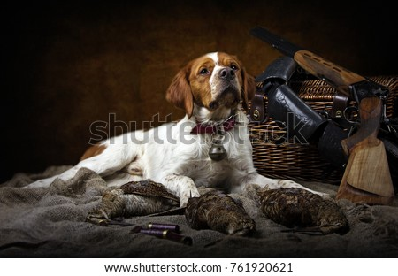hunting dog with woodcock #761920621