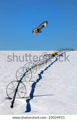 Hunting Hawk