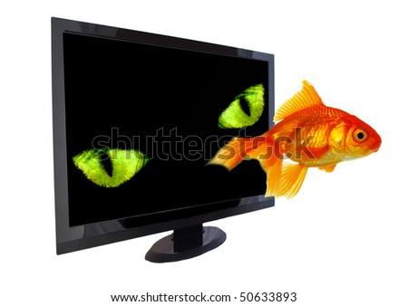 Hunting monitor