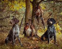 hunting pheasants the hunt was successful for Hey - Zani