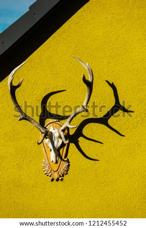 Hunting Trophy - Antlers of a Deer - on the yellow Facade of a House in Germany