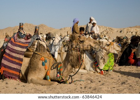 HURGHADA, EGYPT - JUNE 6: We take a closer look at the camels in Sahara Desert, Egypt, on June 6, 2008. Here beduins wait for tourists to take a camel ride so that they can earn money for families.