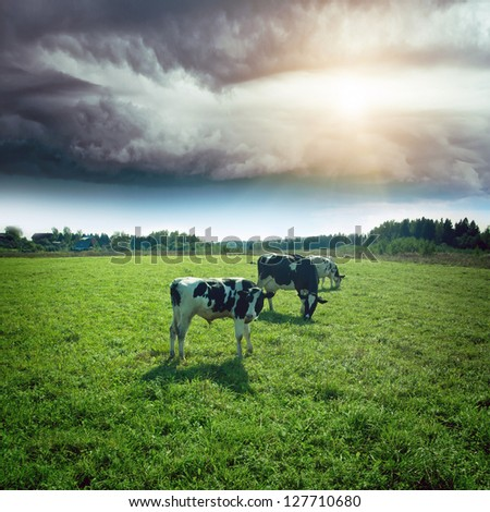 Hurricane over meadow. Summer bad weather