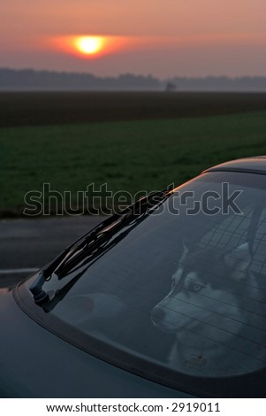 husky dog in car with sunrise in the background