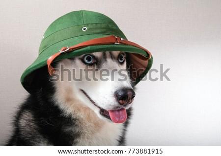 husky dog in retro green pith...