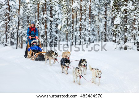 husky dogs are pulling sledge...