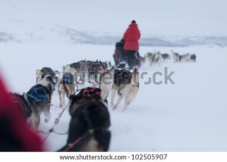 Husky Dogsleds racing in snow