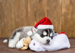 Husky puppy wearing a red santa`s hat hugs toy bear and sleeps on pillow  on wooden background
