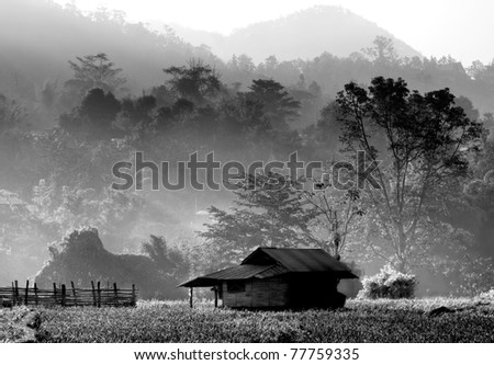 hut in the forest, northern thailand