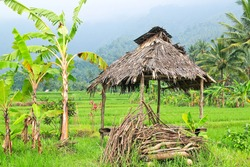 hut in the rice field in Bali Indonesia traditional farming country side rice paddy near mountain