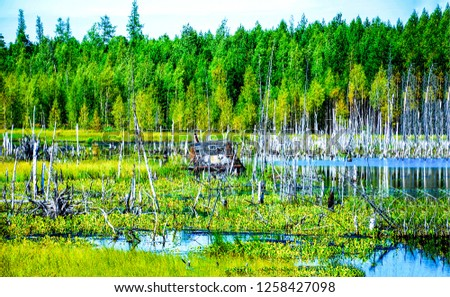 Hut on swamp landscape. Swamp hut water. Swamp trees water. Swamp hut view