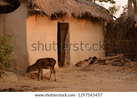 Indian village hut Images and Stock Photos - Avopix com