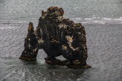 Hvítserkur rock in the cost of Iceland