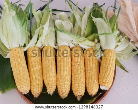 Hybrid corn glutinous rice The seeds have 3 colors: white, purple and yellow. Seeds are arranged in full pods. Pods are large Green bark, covering up to the end of the pod, good weight, sticking to th #1298146327