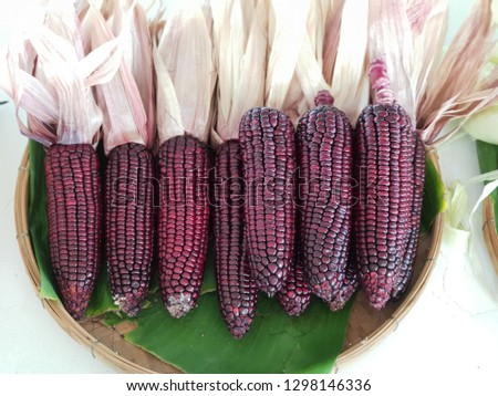 Hybrid corn glutinous rice The seeds have 3 colors: white, purple and yellow. Seeds are arranged in full pods. Pods are large Green bark, covering up to the end of the pod, good weight, sticking to th #1298146336