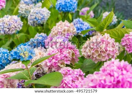Free Photos Small Purple Flowers At The Big Bud Avopix