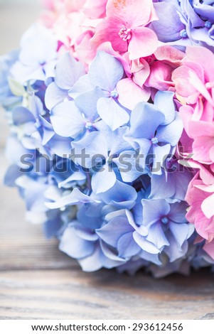 Hydrangea flowers close up on the table