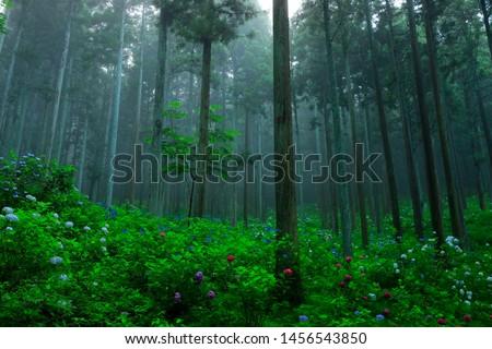 Hydrangea in the Forest, Ichinoseki City, Iwate Prefecture #1456543850
