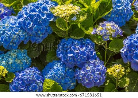 Free Photos Flower Rosa Color Hortensia Avopixcom - Color-hortensia