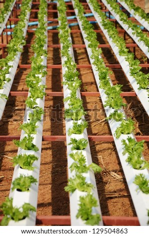 hydroponic plantation - stock photo