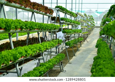 Hydroponic vertical farming systems #1289428801