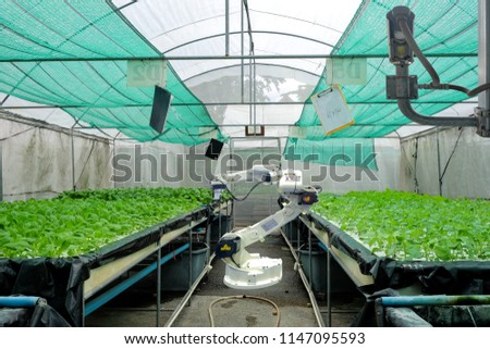 Hydroponics vegetable garden on smart greenhouse that installed industry robotic for worked and harvesting, and also installed a CCTV camera for keep data and prevent theft, Smart farming 4.0 concept #1147095593