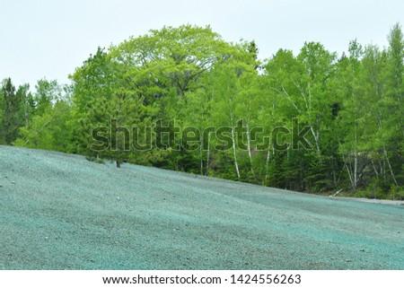 Hydroseeded Field in the Springtime Сток-фото ©
