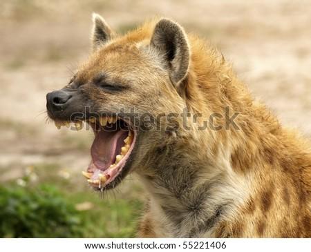 Hyena Powerful Jaws