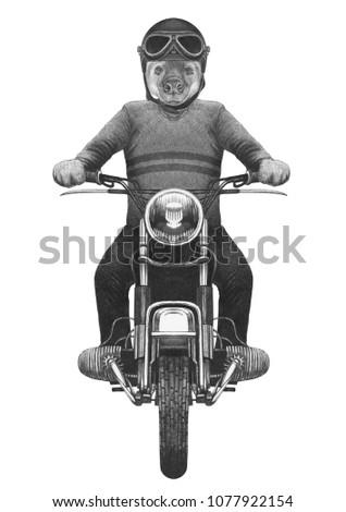 Hyena rides motorcycle, hand-drawn illustration