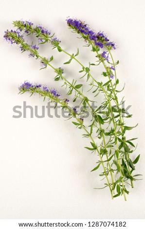 Hyssop botanical board