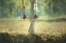 I am alone. Little dog stay alone in the field waiting for its buddy.Let's lonely feeling, await and cute.Loneliness solitude friendship concept