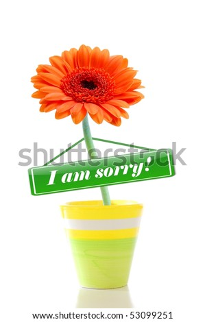 i am sorry flower greeting card isolated on white background