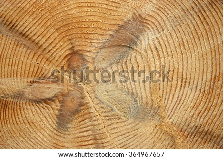 I cut down a tree that displays the annual rings. Background image in natural, earthy tones