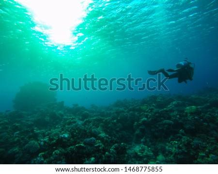 I did Scuba diving in Dahab #1468775855
