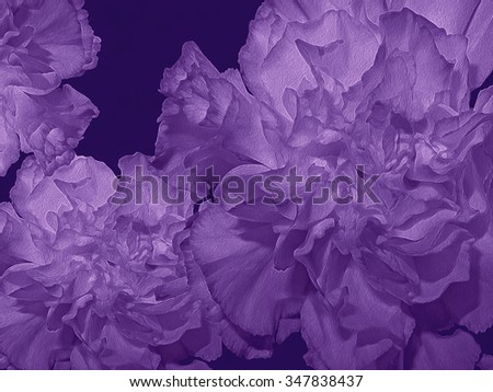 I have manipulated one of my floral photos of a single bloom to create a series of compositions featuring this beautiful, lush Dianthus Carnation.   #347838437