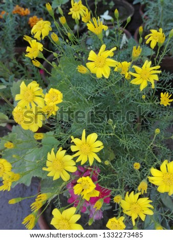 I see yellow flowers in parkand capture this pic.