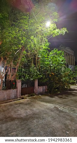 I took this photo while walking in the house complex at night and saw beautiful bamboo trees when exposed to the lights Photo stock ©