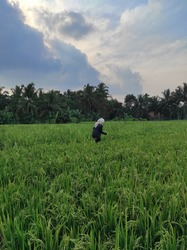 I took this photo while walking with my friends in the rice field embankment, it is very nice to be in the village with cool air and beautiful scenery