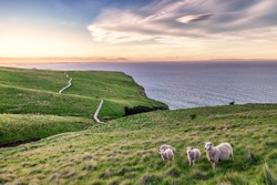 I took this shot in Christchurch New Zealand when trekking along the coastline.  It was approaching sunset and the sky is so vibrant and beautiful. Three cute young lambs follows their mother sheep.