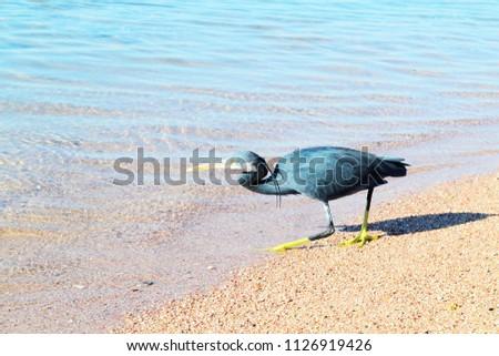 ibis bird standing on top of a sandy beach #1126919426