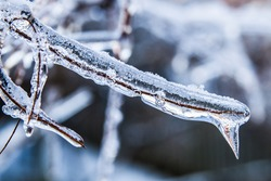 Ice Accumulation on Tree Branch