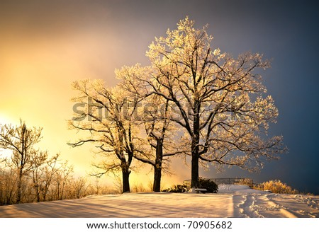 Ice and Frost Covered Oak Tree in Cold Winter Snow at Jump Off Rock In Western North Carolina Blue Ridge Mountains