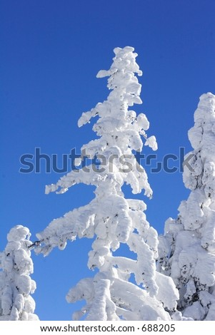 ice covered tree with blue sky