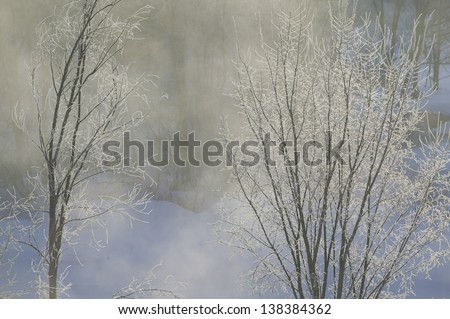 Ice covered trees on a cold Vermont morning, Stowe, Vermont, USA