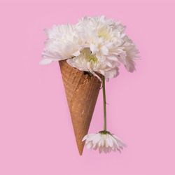 Ice cream cone with white flowers and dripping effect on a pastel pink background. Minimal spring or summer concept. A modern fun concept of gifts, anniversary and love.