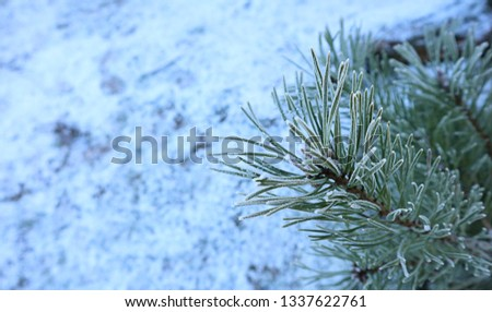 Ice crystals,frost in the morning,frost background,frost on the ground,frost on grass #1337622761