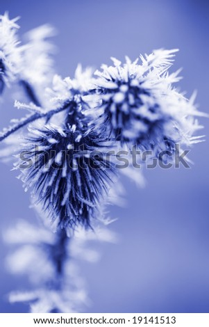 Ice Crystals on Thistle Weed with Copy Space